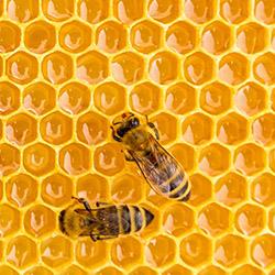 Analyse von Honig und Bienenprodukten wie Propolis, Gelee Royal, Bienenwachs