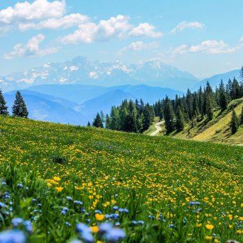 Bio-Produkte und Pestizide